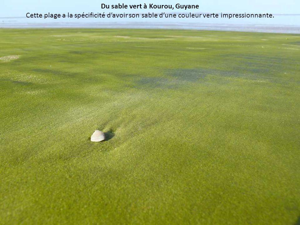Du sable vert à Kourou, Guyane Cette plage a la spécificité d'avoir son sable d'une couleur verte impressionnante.
