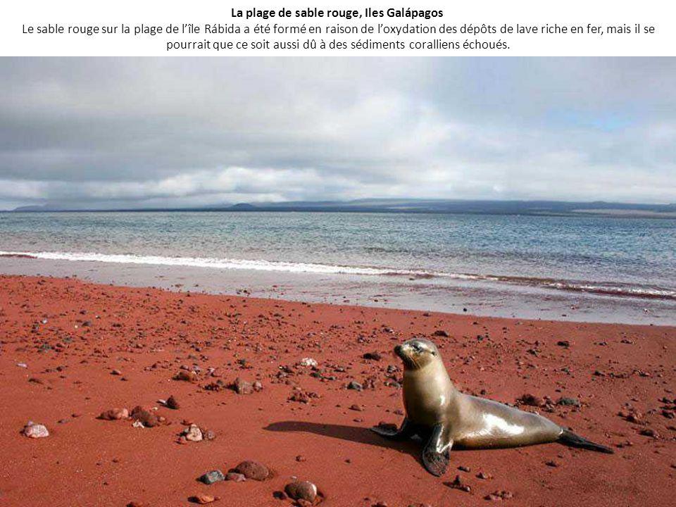 La plage de sable rouge, Iles Galápagos Le sable rouge sur la plage de l'île Rábida a été formé en raison de l'oxydation des dépôts de lave riche en fer, mais il se pourrait que ce soit aussi dû à des sédiments coralliens échoués.