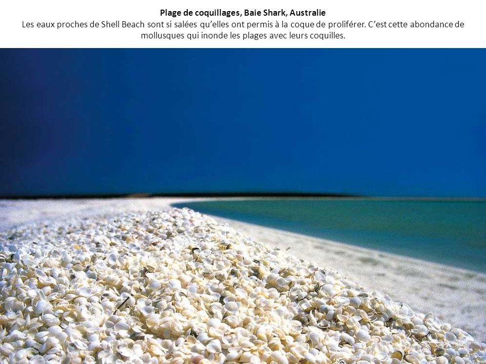 Plage de coquillages, Baie Shark, Australie Les eaux proches de Shell Beach sont si salées qu'elles ont permis à la coque de proliférer.