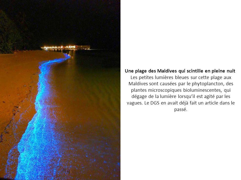 Une plage des Maldives qui scintille en pleine nuit Les petites lumières bleues sur cette plage aux Maldives sont causées par le phytoplancton, des plantes microscopiques bioluminescentes, qui dégage de la lumière lorsqu'il est agité par les vagues.