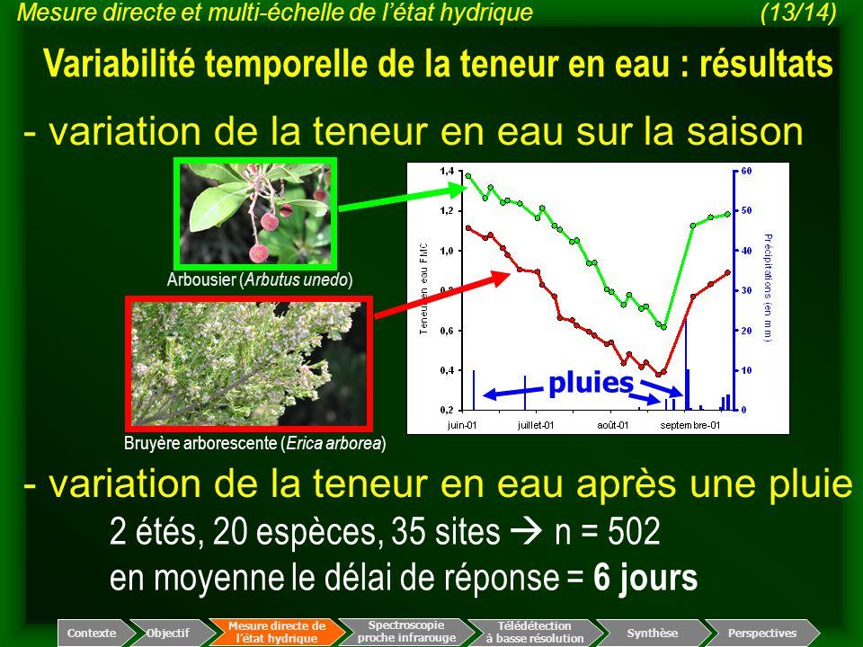 - variation de la teneur en eau sur la saison Bruyère arborescente ( Erica arborea ) Arbousier ( Arbutus unedo ) pluies - variation de la teneur en ea