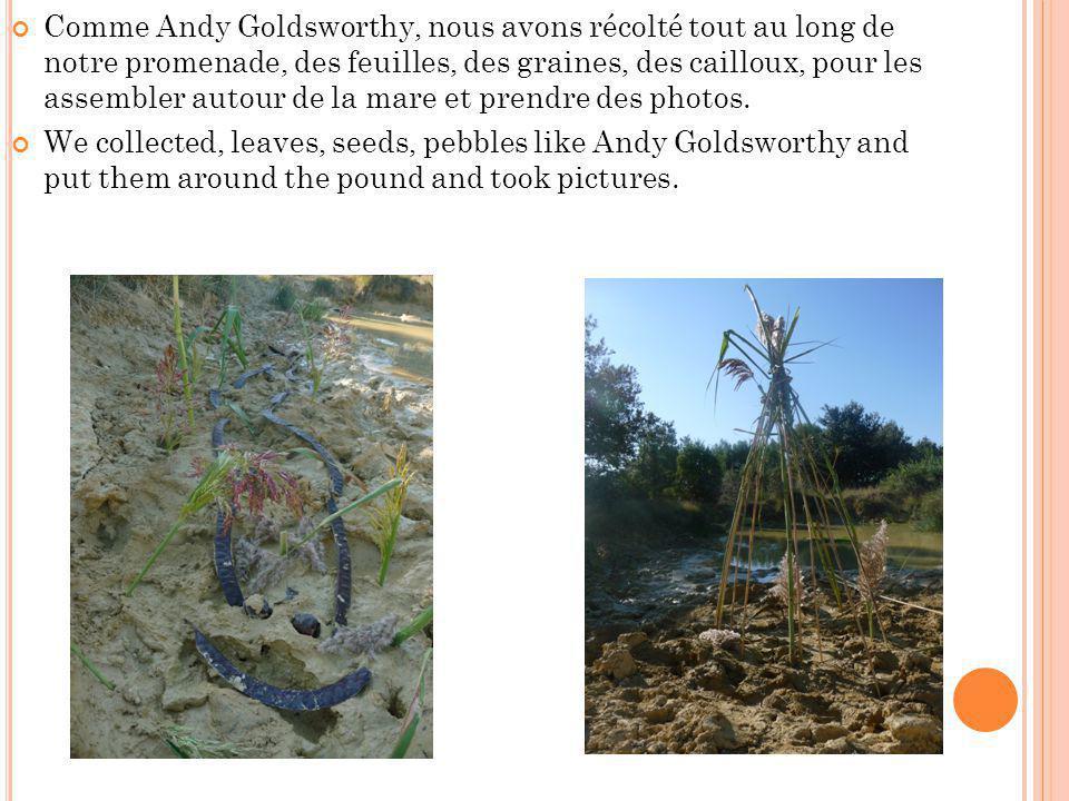 Comme Andy Goldsworthy, nous avons récolté tout au long de notre promenade, des feuilles, des graines, des cailloux, pour les assembler autour de la mare et prendre des photos.