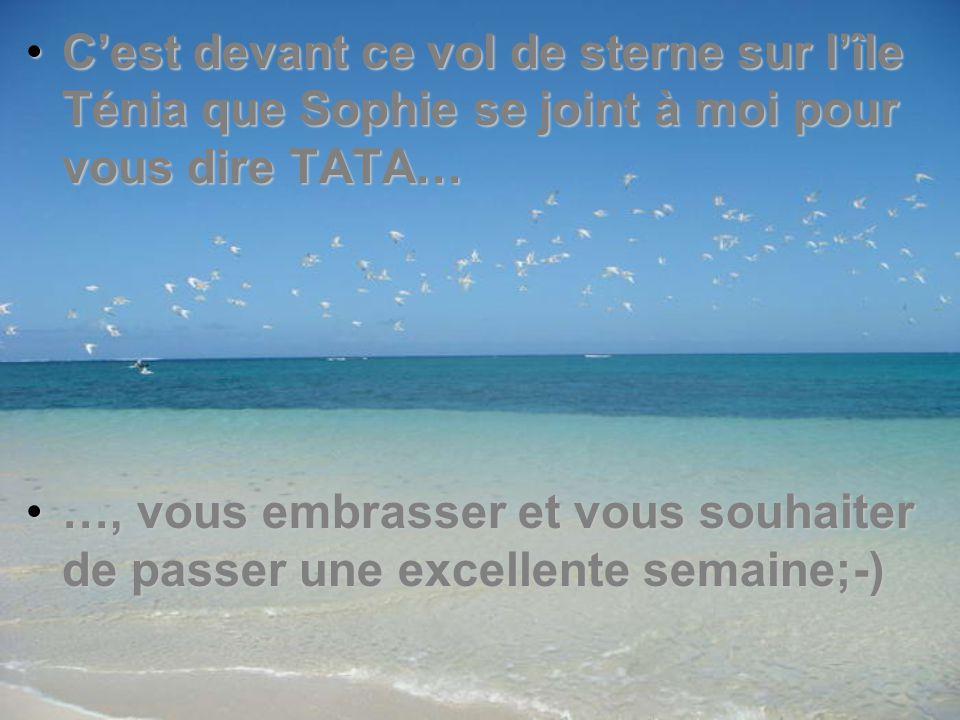 C'est devant ce vol de sterne sur l'île Ténia que Sophie se joint à moi pour vous dire TATA…C'est devant ce vol de sterne sur l'île Ténia que Sophie se joint à moi pour vous dire TATA… …, vous embrasser et vous souhaiter de passer une excellente semaine;-)…, vous embrasser et vous souhaiter de passer une excellente semaine;-)