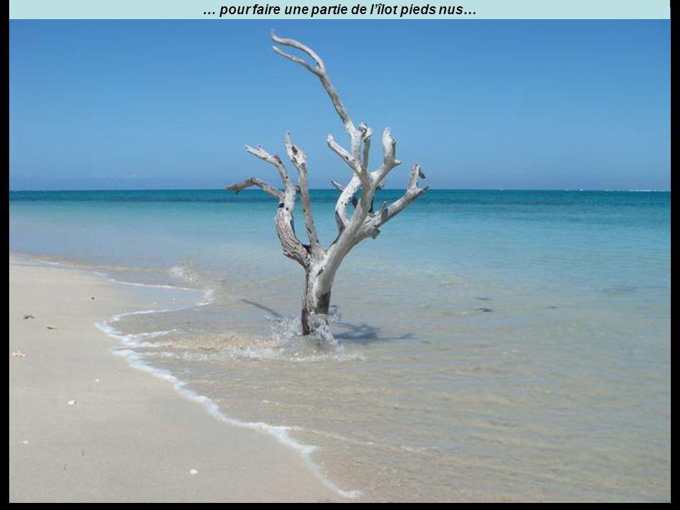 … pour faire une partie de l'îlot pieds nus…