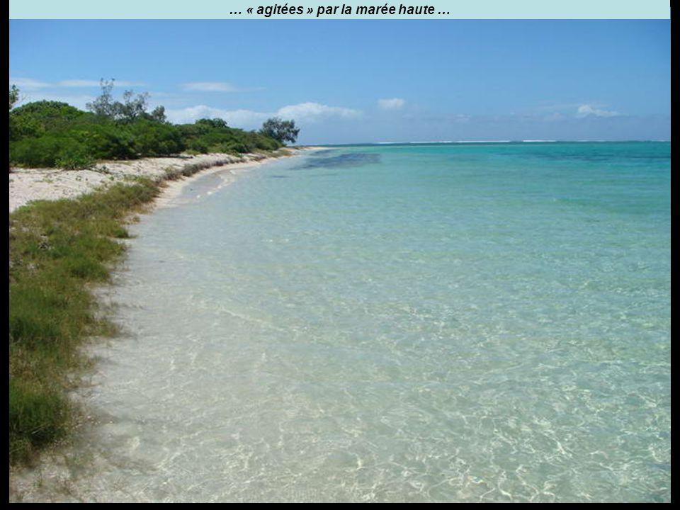 … « agitées » par la marée haute …