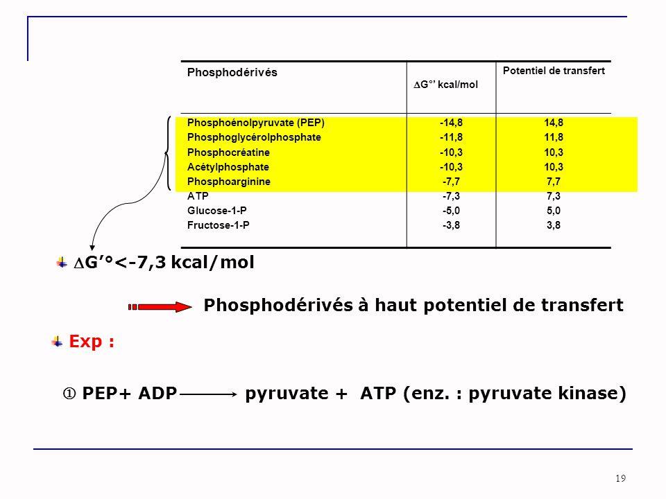 19 Phosphodérivés  G°' kcal/mol Potentiel de transfert Phosphoénolpyruvate (PEP) Phosphoglycérolphosphate Phosphocréatine Acétylphosphate Phosphoargi
