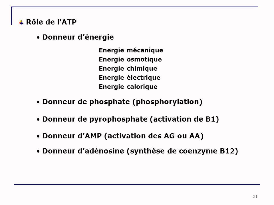 21 Rôle de l'ATP Donneur de phosphate (phosphorylation) Donneur de pyrophosphate (activation de B1) Donneur d'AMP (activation des AG ou AA) Donneur d'adénosine (synthèse de coenzyme B12) Donneur d'énergie Energie mécanique Energie osmotique Energie chimique Energie électrique Energie calorique