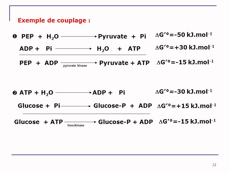 23 PEP + H 2 O Pyruvate + Pi ADP + Pi H 2 O + ATP G'°=-50 kJ.mol -1 G'°=+30 kJ.mol -1 Exemple de couplage : PEP + ADP Pyruvate + ATP G'°=-15 kJ.mol