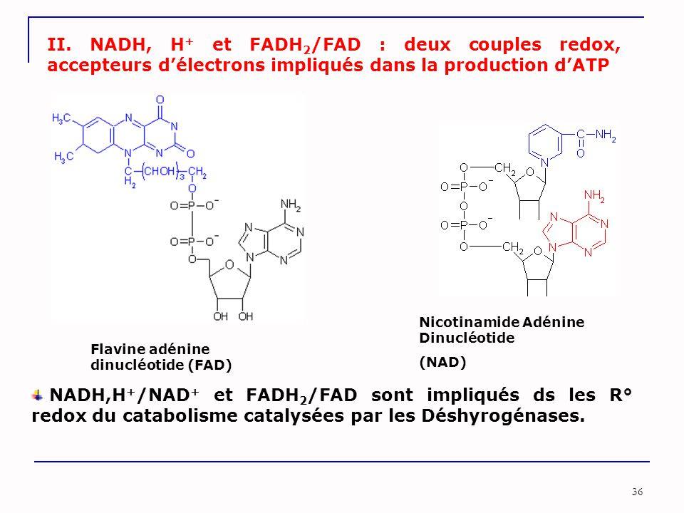 36 II. NADH, H + et FADH 2 /FAD : deux couples redox, accepteurs d'électrons impliqués dans la production d'ATP Nicotinamide Adénine Dinucléotide (NAD