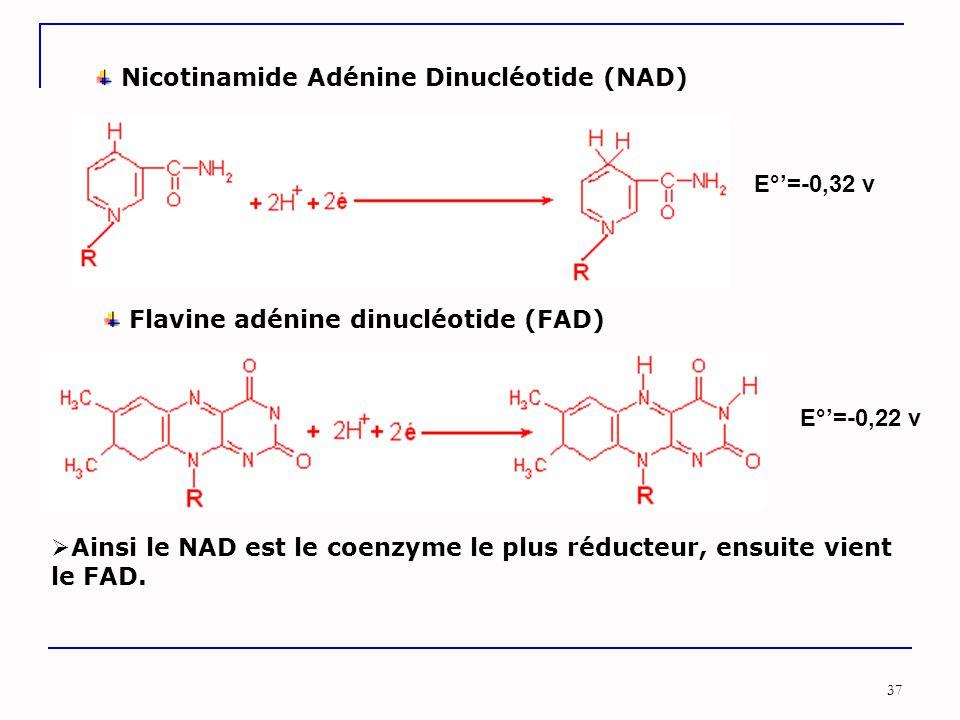 37 Nicotinamide Adénine Dinucléotide (NAD) E°'=-0,32 v E°'=-0,22 v Flavine adénine dinucléotide (FAD)  Ainsi le NAD est le coenzyme le plus réducteur, ensuite vient le FAD.