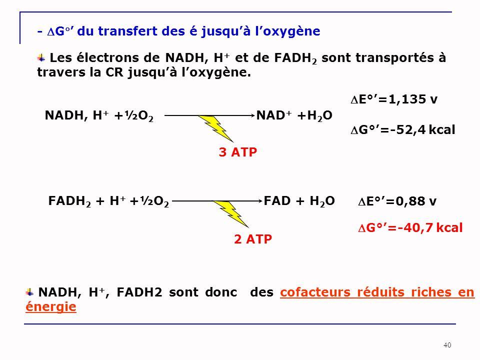 40 - G' du transfert des é jusqu'à l'oxygène Les électrons de NADH, H + et de FADH 2 sont transportés à travers la CR jusqu'à l'oxygène. NADH, H + +