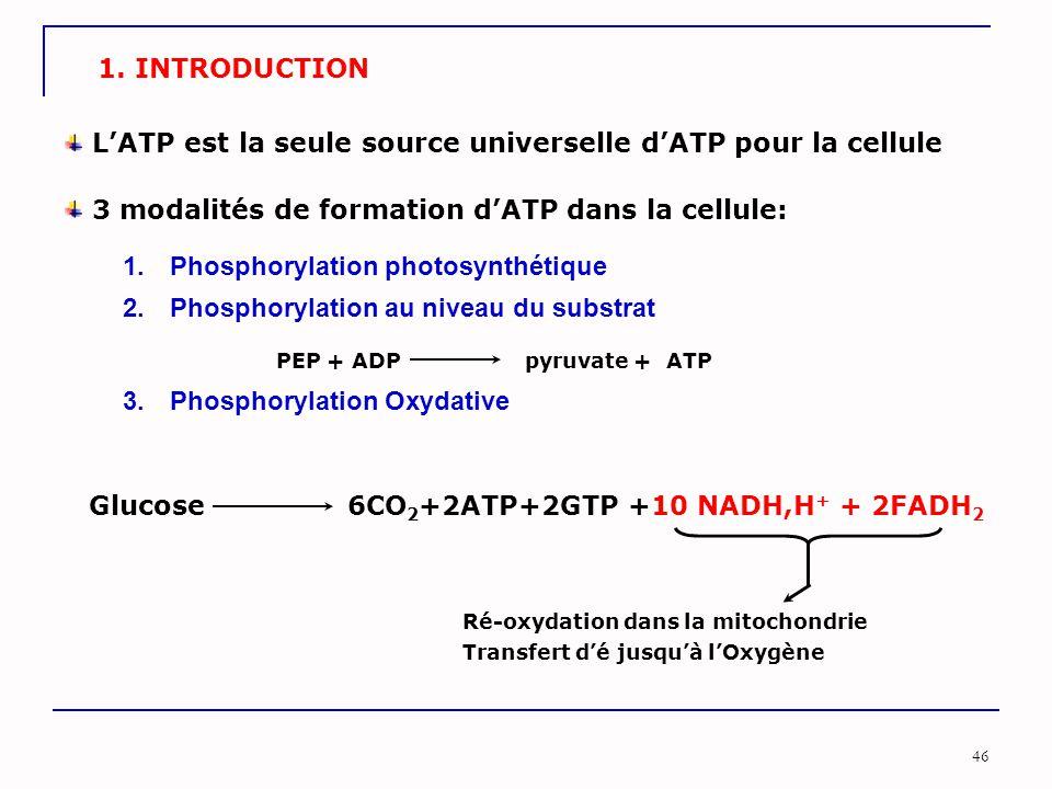 46 1. INTRODUCTION L'ATP est la seule source universelle d'ATP pour la cellule 3 modalités de formation d'ATP dans la cellule: 2. Phosphorylation au n