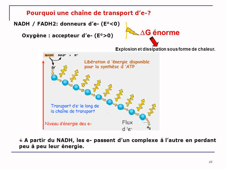 49 Pourquoi une chaîne de transport d'e-? NADH / FADH2: donneurs d'e- (E°<0) Oxygène : accepteur d'e- (E°>0) Explosion et dissipation sous forme de ch