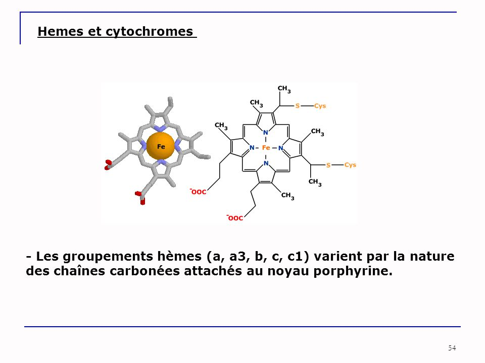 54 Hemes et cytochromes - Les groupements hèmes (a, a3, b, c, c1) varient par la nature des chaînes carbonées attachés au noyau porphyrine.