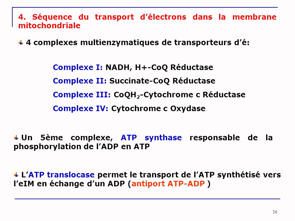 56 4. Séquence du transport d'électrons dans la membrane mitochondriale 4 complexes multienzymatiques de transporteurs d'é: Complexe I: NADH, H+-CoQ R