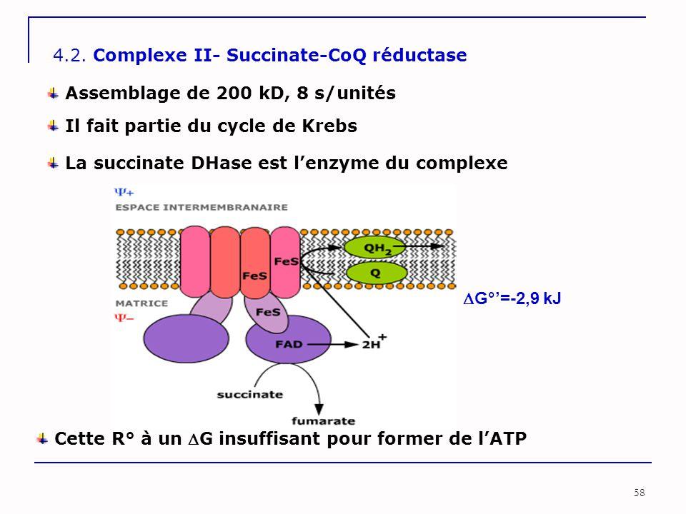 58 4.2. Complexe II- Succinate-CoQ réductase La succinate DHase est l'enzyme du complexe Assemblage de 200 kD, 8 s/unités Cette R° à un G insuffisant