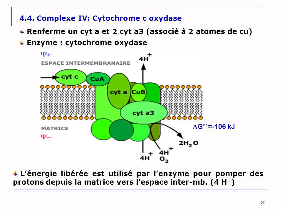 60 4.4. Complexe IV: Cytochrome c oxydase Enzyme : cytochrome oxydase L'énergie libérée est utilisé par l'enzyme pour pomper des protons depuis la mat