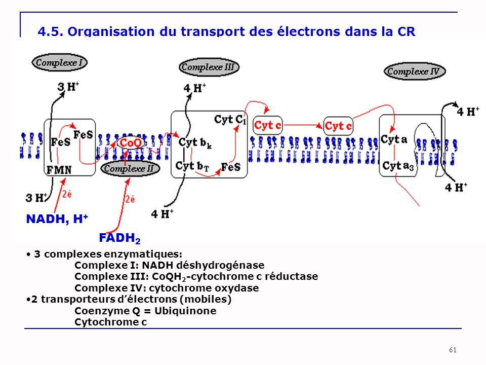 61 4.5. Organisation du transport des électrons dans la CR 3 complexes enzymatiques: Complexe I: NADH déshydrogénase Complexe III: CoQH 2 -cytochrome