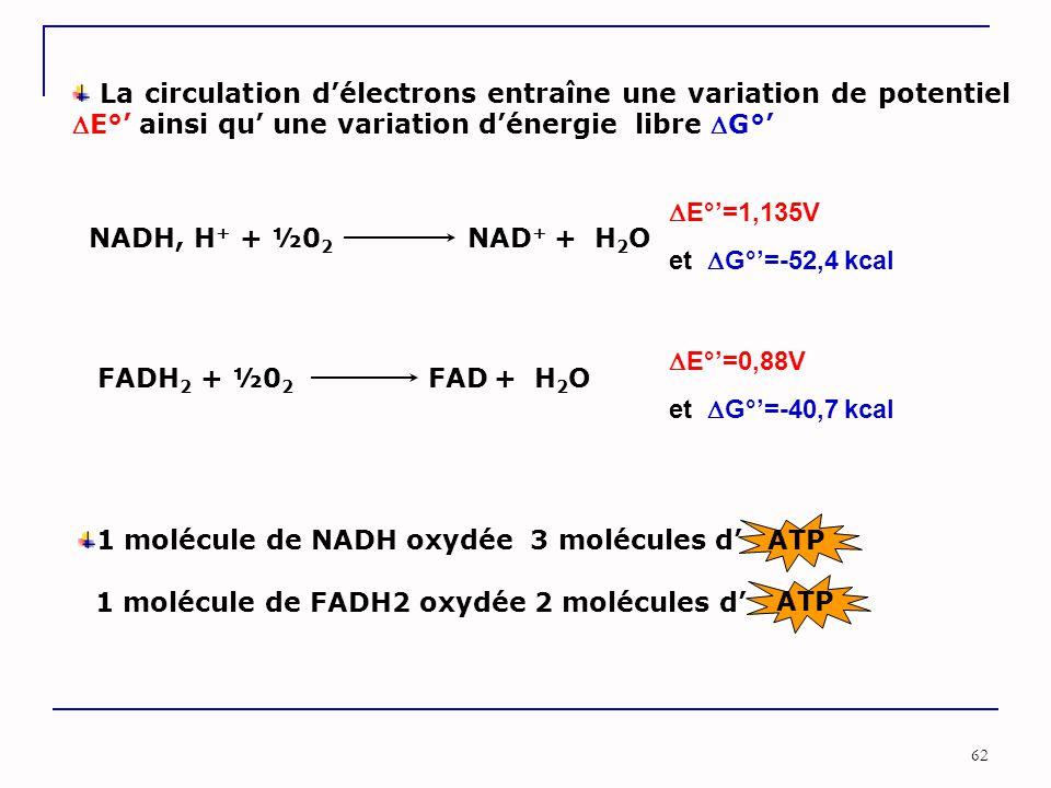 62 La circulation d'électrons entraîne une variation de potentiel E°' ainsi qu' une variation d'énergie libre G°' NADH, H + + ½0 2 NAD + + H 2 O FADH 2 + ½0 2 FAD + H 2 O  E°'=1,135V et  G°'=-52,4 kcal  E°'=0,88V et  G°'=-40,7 kcal 1 molécule de NADH oxydée 3 molécules d' 1 molécule de FADH2 oxydée 2 molécules d' ATP