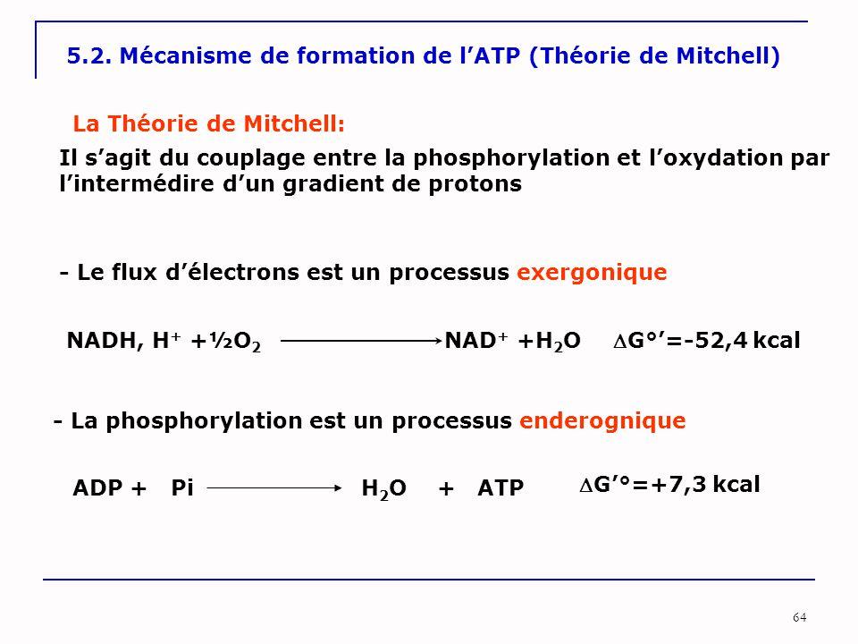 64 5.2. Mécanisme de formation de l'ATP (Théorie de Mitchell) La Théorie de Mitchell: Il s'agit du couplage entre la phosphorylation et l'oxydation pa