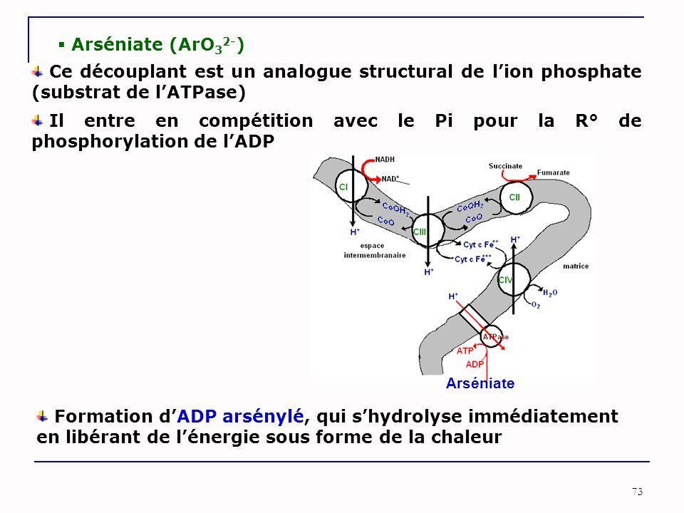73  Arséniate (ArO 3 2- ) Ce découplant est un analogue structural de l'ion phosphate (substrat de l'ATPase) Il entre en compétition avec le Pi pour
