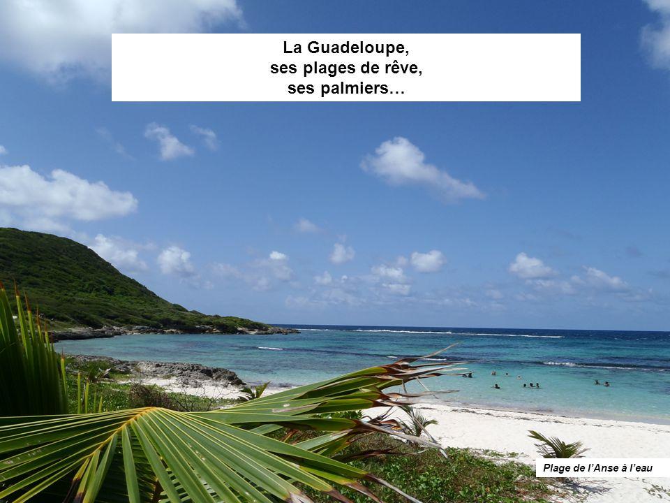 La Guadeloupe, ses plages de rêve, ses palmiers… Plage de l'Anse à l'eau