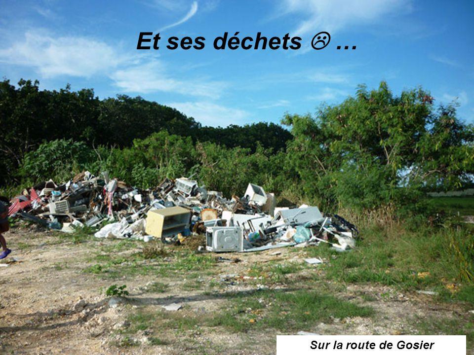 Et ses déchets  … Sur la route de Gosier