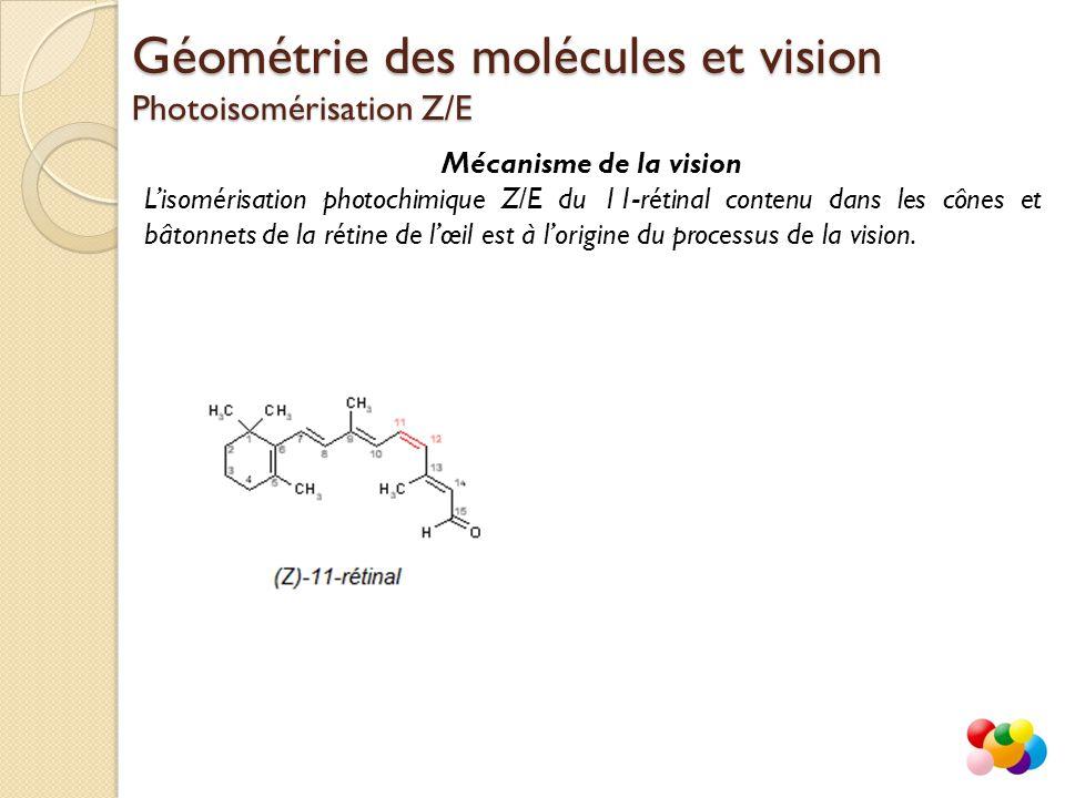 Mécanisme de la vision L'isomérisation photochimique Z/E du 11-rétinal contenu dans les cônes et bâtonnets de la rétine de l'œil est à l'origine du pr