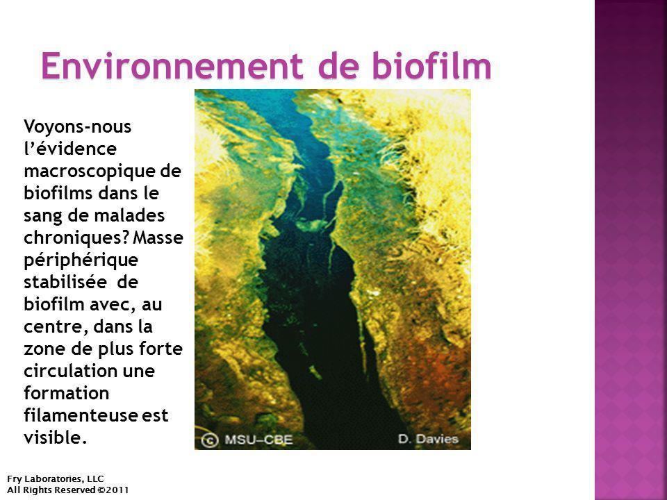 Environnement de biofilm Fry Laboratories, LLC All Rights Reserved ©2011 Voyons-nous l'évidence macroscopique de biofilms dans le sang de malades chroniques.