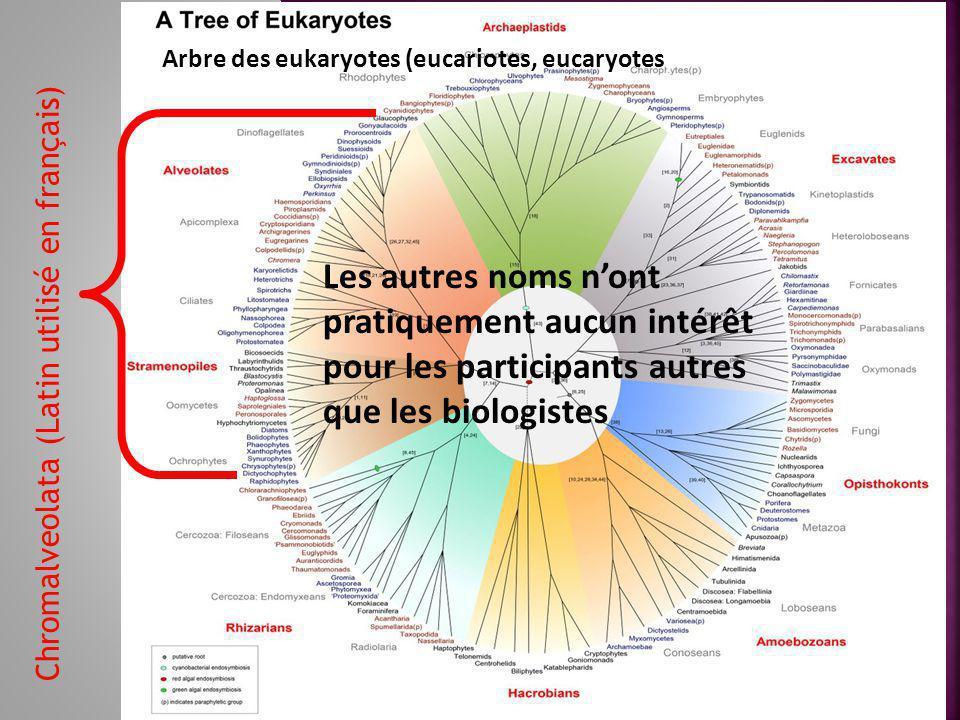 Chromalveolata (Latin utilisé en français) Arbre des eukaryotes (eucariotes, eucaryotes) Les autres noms n'ont pratiquement aucun intérêt pour les participants autres que les biologistes