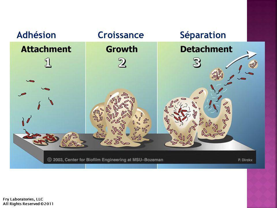  Des brins de biofilm provoquent des perturbations catastrophiques de la circulation, affectant les systèmes environnemental et médical.