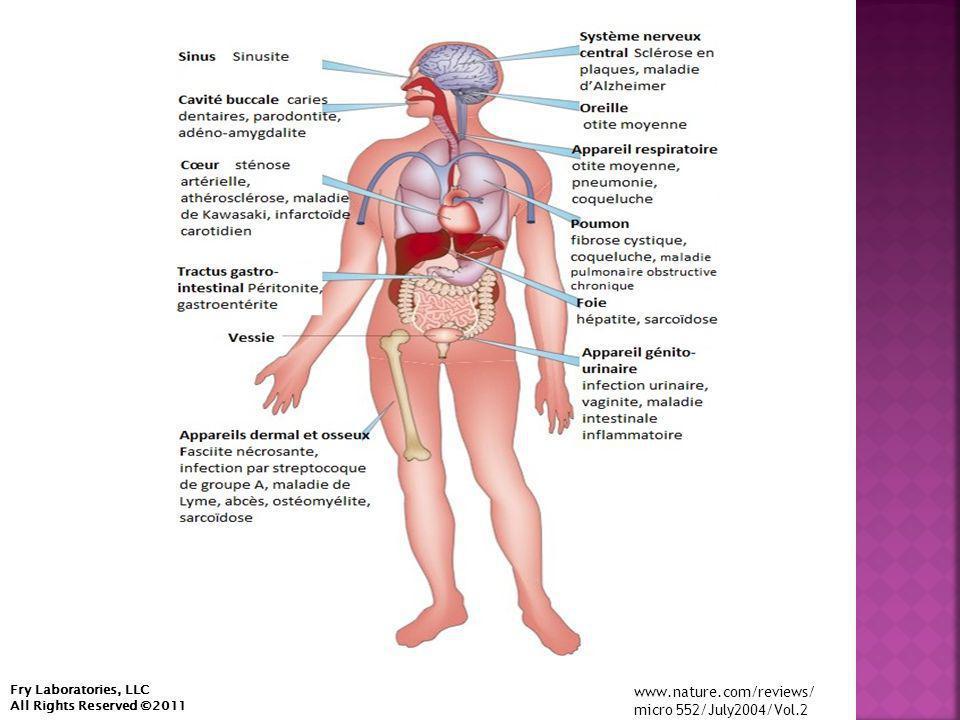  Métagénomique  Étude de Phoenix – 30 patients souffrant de SFC, 30 souffrant de SeP, et 30 souffrant de SLA Lou-Gehrig/ et plus de 100 témoins  Étude de la vascularité – plaque artérielle obtenue par artériectomie par succion chez 15 patients Fry Laboratories, LLC All Rights Reserved ©2013
