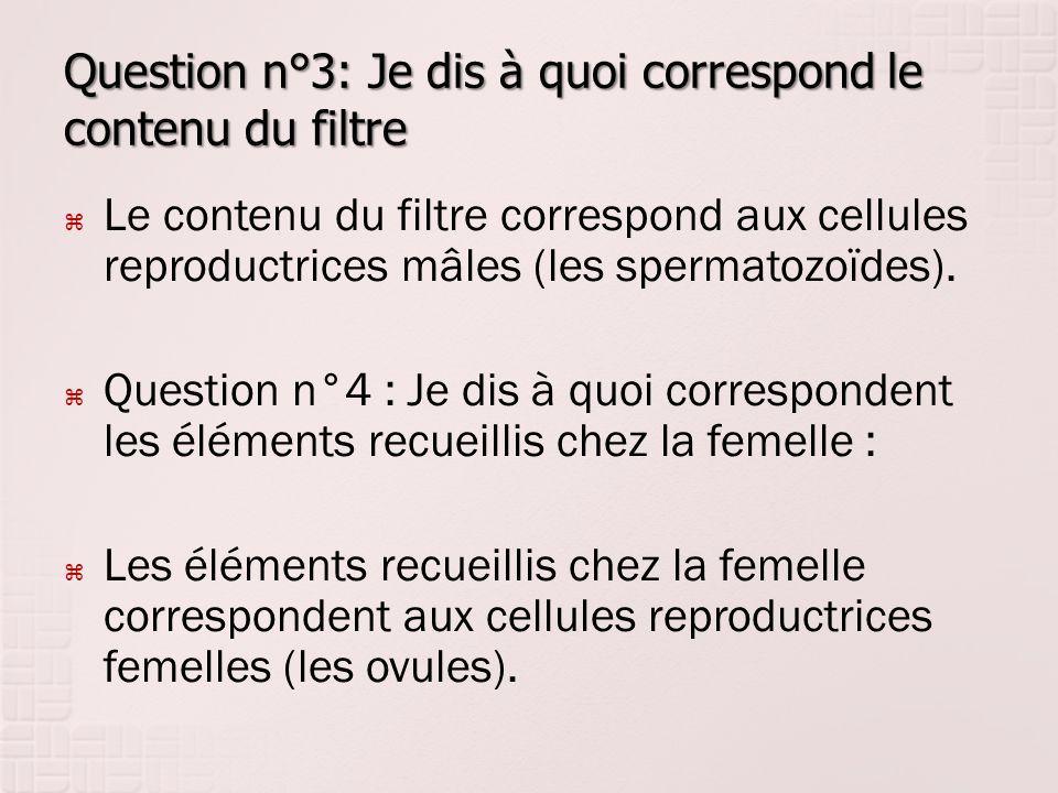 Question n°3: Je dis à quoi correspond le contenu du filtre  Le contenu du filtre correspond aux cellules reproductrices mâles (les spermatozoïdes).