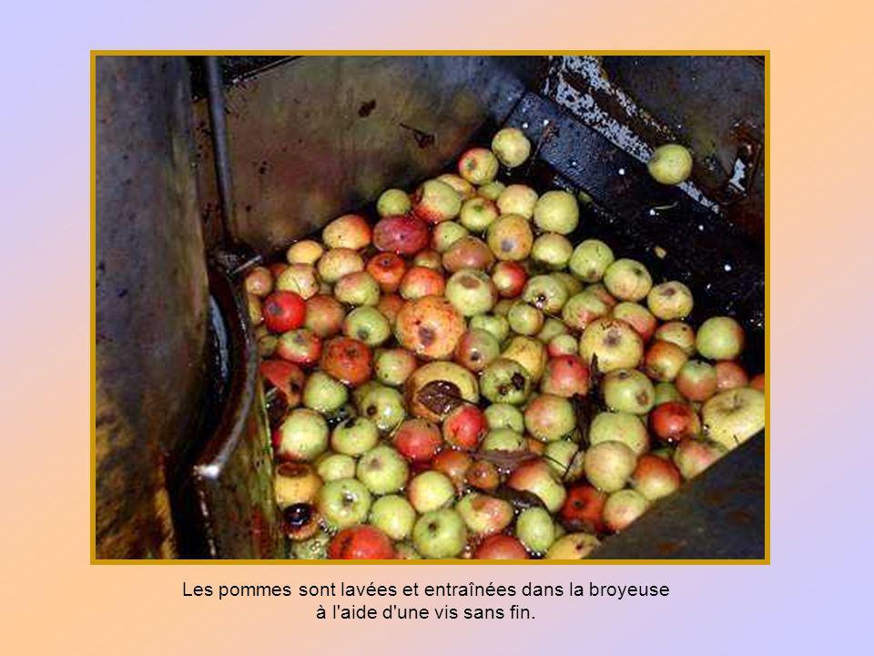 Il existe de nombreuses variétés de pommes à cidre, plus ou moins sucrées ou acides.