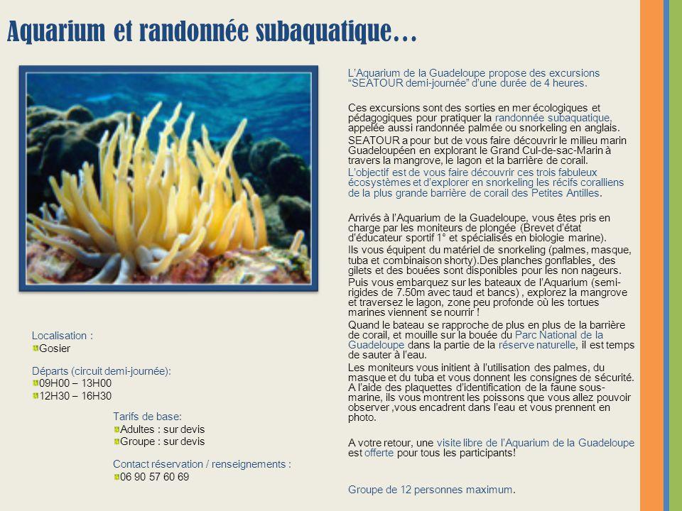 """L'Aquarium de la Guadeloupe propose des excursions """"SEATOUR demi-journée"""" d'une durée de 4 heures. Ces excursions sont des sorties en mer écologiques"""