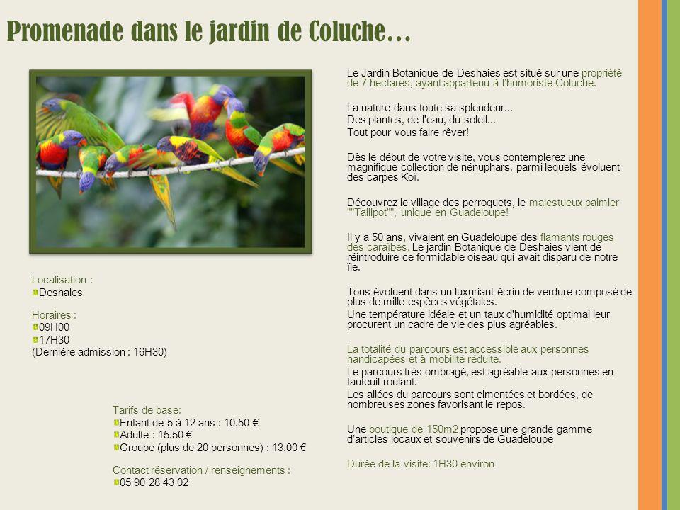 Le Jardin Botanique de Deshaies est situé sur une propriété de 7 hectares, ayant appartenu à l'humoriste Coluche. La nature dans toute sa splendeur...