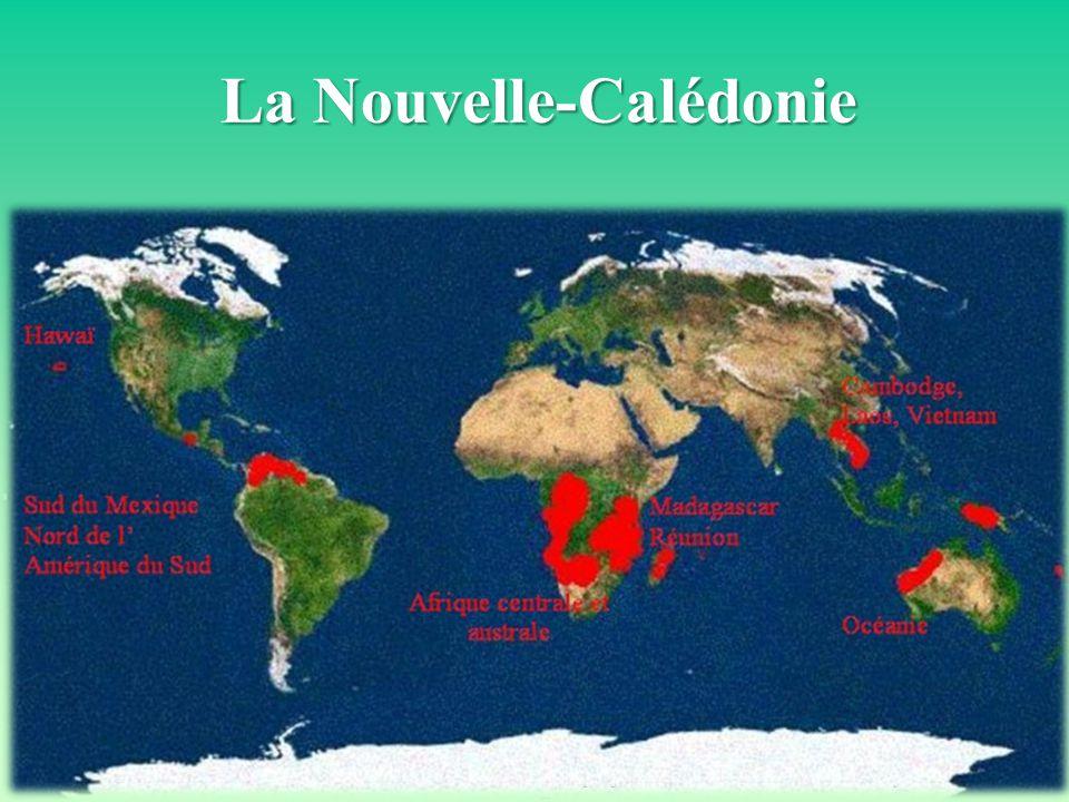 Vincent MARY - PFS/CEN NC Séminaire de restitution du projet LIFE+CONEXERUN – 2 au 6 juin 2014 La Nouvelle-Calédonie