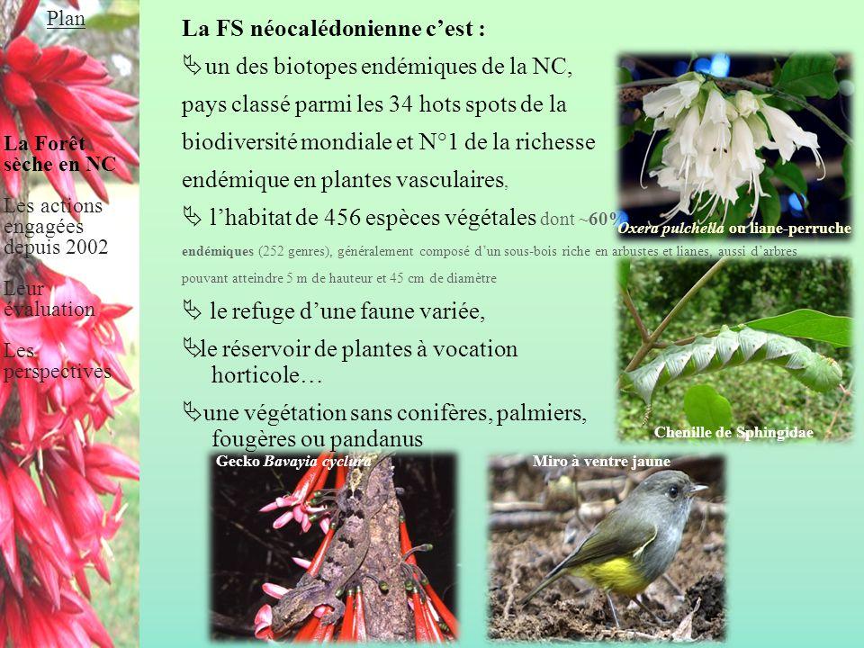 La FS néocalédonienne c'est :  un des biotopes endémiques de la NC, pays classé parmi les 34 hots spots de la biodiversité mondiale et N°1 de la rich