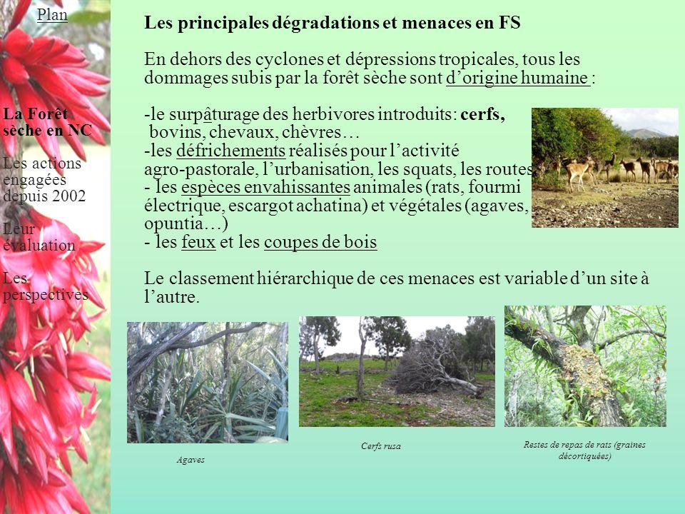 Les principales dégradations et menaces en FS En dehors des cyclones et dépressions tropicales, tous les dommages subis par la forêt sèche sont d'orig