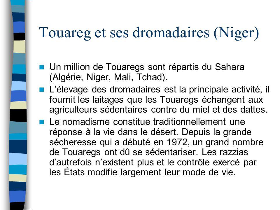 Touareg et ses dromadaires (Niger) Un million de Touaregs sont répartis du Sahara (Algérie, Niger, Mali, Tchad). L'élevage des dromadaires est la prin