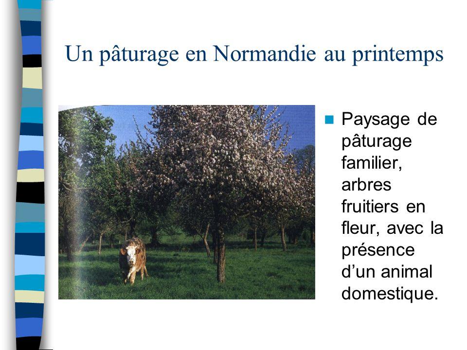 Un pâturage en Normandie au printemps Paysage de pâturage familier, arbres fruitiers en fleur, avec la présence d'un animal domestique.