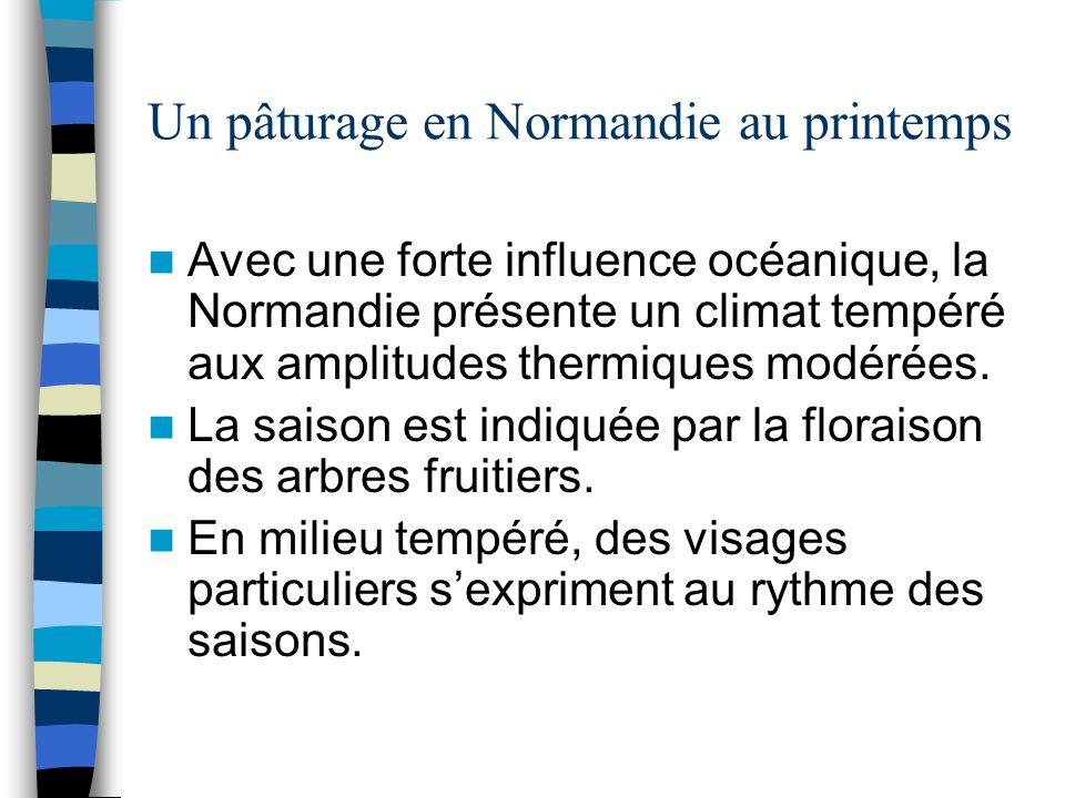 Un pâturage en Normandie au printemps Avec une forte influence océanique, la Normandie présente un climat tempéré aux amplitudes thermiques modérées.