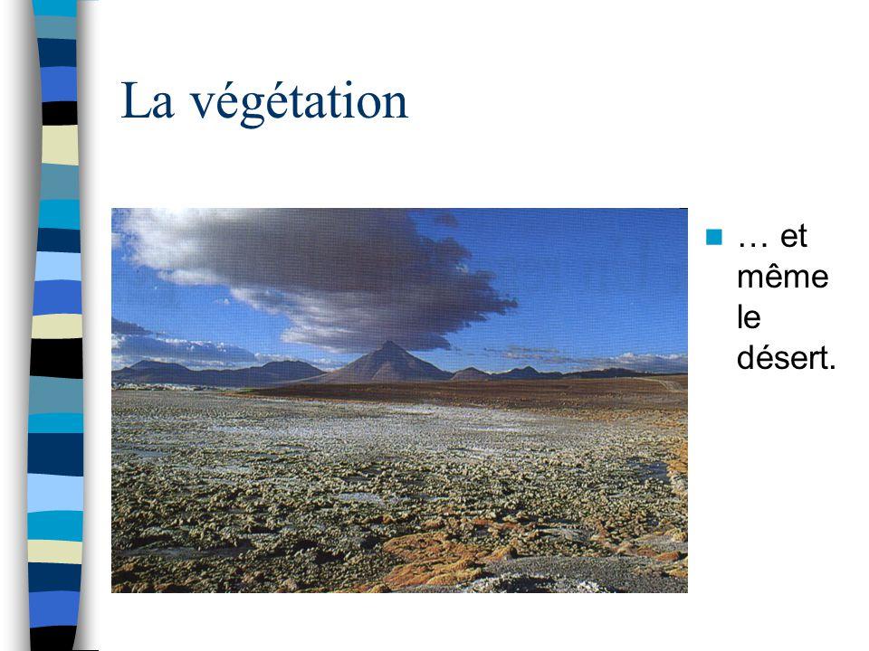 La végétation … et même le désert.