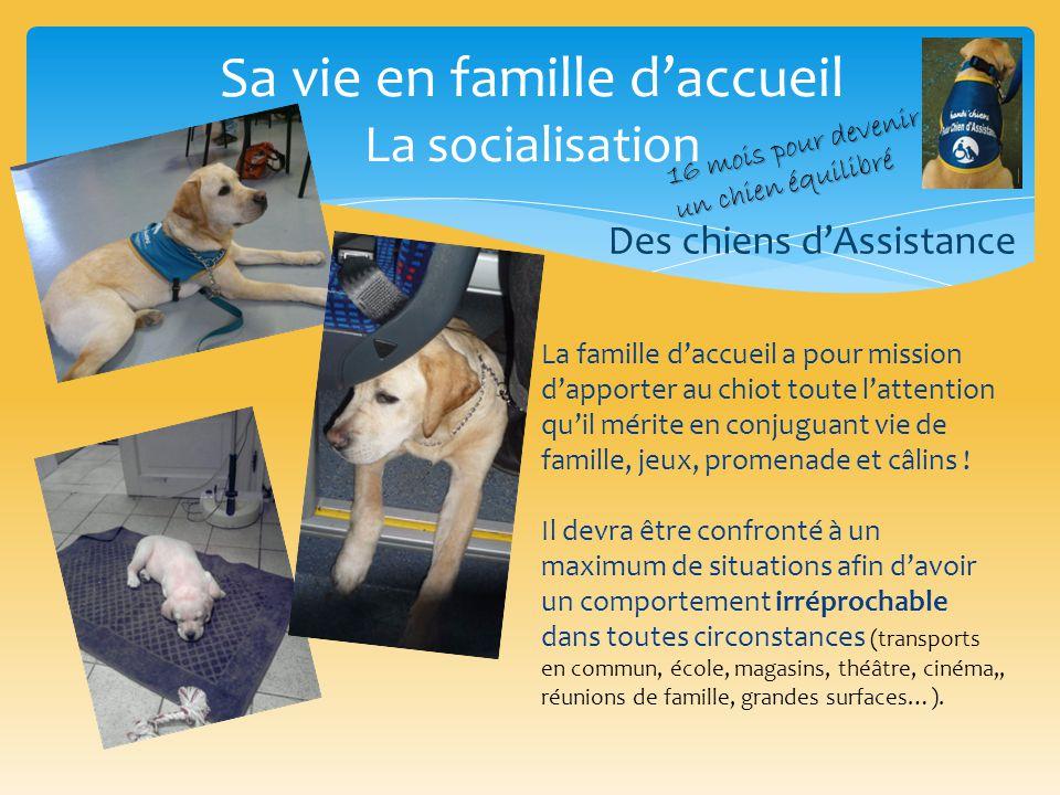 Sa vie en famille d'accueil Les soins Des chiens d'Assistance Les sorties Le bain Le brossage Le nettoyage des yeux, des oreilles, des dents Les visites chez le vétérinaire 16 mois pour devenir un chien équilibré
