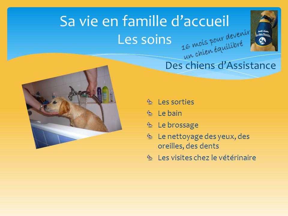 Sa vie en famille d'accueil Les soins Des chiens d'Assistance Les sorties Le bain Le brossage Le nettoyage des yeux, des oreilles, des dents Les visit