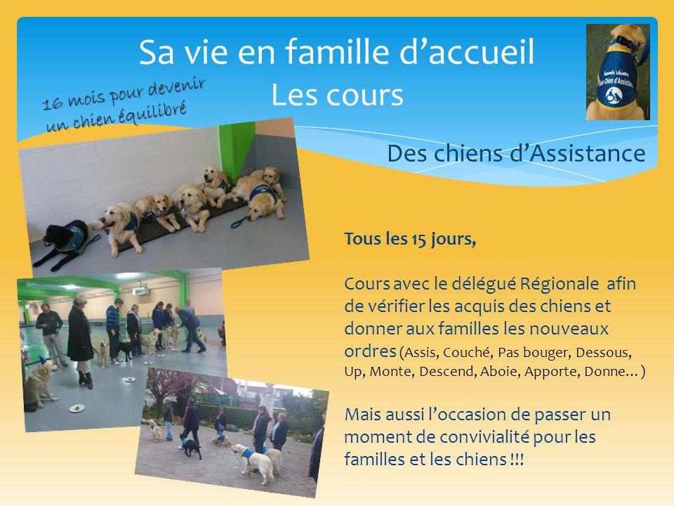 Sa vie en famille d'accueil Les cours Tous les 15 jours, Cours avec le délégué Régionale afin de vérifier les acquis des chiens et donner aux familles