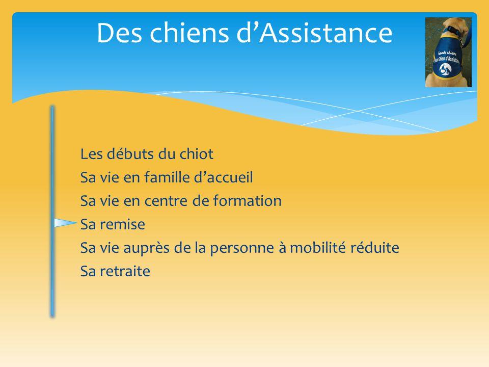 Sa remise Des chiens d'Assistance La personne handicapée devra suivre un stage obligatoire d'adaptation et de transmission du chien.