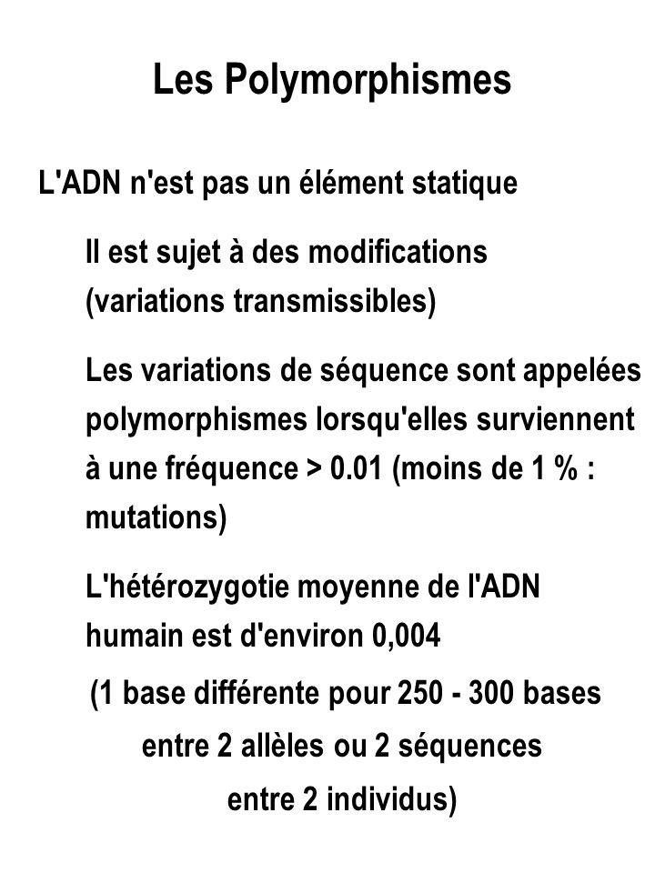 Le polymorphisme affecte toutes les régions de l ADN - Séquences codantes - Introns - ADN répété (mini, microsat…) Il peut être la conséquence 1- d' une simple substitution de nucléotide / SNP 2 d'une modification d'un site de restriction : cas particulier de SNP 3 d'une modification de taille d un motif répété : polymorphisme de longueur
