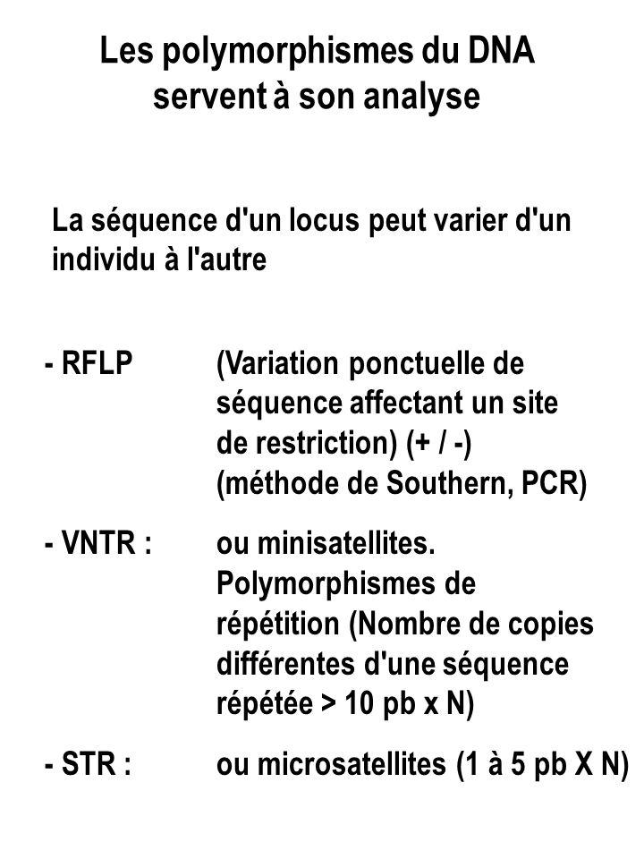 Les polymorphismes du DNA servent à son analyse La séquence d un locus peut varier d un individu à l autre - RFLP (Variation ponctuelle de séquence affectant un site de restriction) (+ / -) (méthode de Southern, PCR) - VNTR : ou minisatellites.