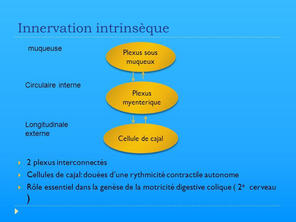 Innervation intrinsèque  2 plexus interconnectés  Cellules de cajal: douées d'une rythmicité contractile autonome  Rôle essentiel dans la genèse de